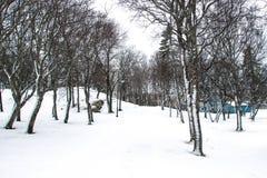 Madera en invierno Imagenes de archivo