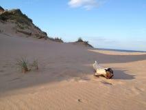 Madera en la playa Fotografía de archivo libre de regalías