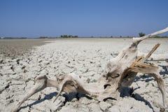 Madera en tierra seca Fotos de archivo