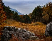Madera encantada del otoño Imagen de archivo libre de regalías