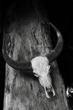 Madera esculpida Fotografía de archivo