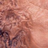 Madera exótica Imagen de archivo