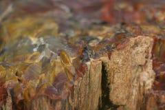 Madera fosilizada Imagen de archivo libre de regalías