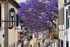 Madera Funchal stock afbeeldingen