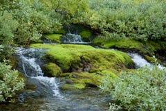 Madera húmeda norteña hermosa en tonos verdes claros Foto de archivo libre de regalías