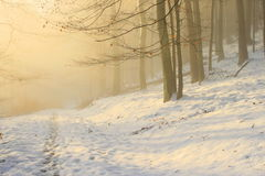 Madera hivernal Fotos de archivo