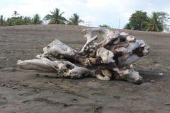 Madera Jaco Costa Rica de la deriva Imagen de archivo libre de regalías