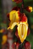 Madera kwiaty Obrazy Royalty Free