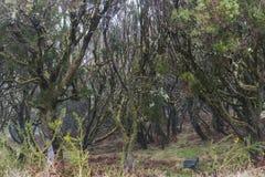 Madera Levada, regenwoud Stock Foto