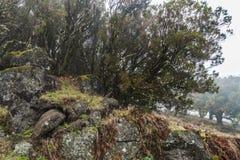 Madera Levada, regenwoud Royalty-vrije Stock Afbeeldingen
