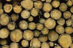 Madera/madera de construcción en el almacenamiento para más adelante procesar Imágenes de archivo libres de regalías