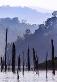 Madera muerta en el lago foto de archivo
