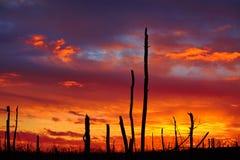 Madera muerta en un fondo de la puesta del sol Foto de archivo
