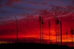 Madera muerta en un fondo de la puesta del sol Fotos de archivo libres de regalías