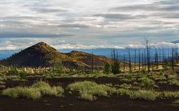 Madera muerta - una consecuencia de un lanzamiento catastrófico de la ceniza durante la erupción del volcán en 1975 Tolbachik del imagen de archivo