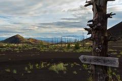 Madera muerta - una consecuencia de un lanzamiento catastrófico de la ceniza durante la erupción del volcán en 1975 Tolbachik del fotos de archivo