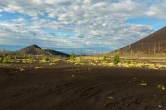 Madera muerta - una consecuencia de un lanzamiento catastrófico de la ceniza durante la erupción del volcán en 1975 Tolbachik del imagenes de archivo