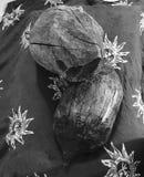 Madera natural Fotos de archivo libres de regalías
