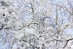 Madera nevada Fotografía de archivo