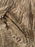 Madera nudosa Imagen de archivo libre de regalías