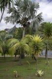Madera ogród botaniczny Funchal, madera,/- Kwiecień 22, 2017: stronniczo palący drzewka palmowe po ogieni w 2016 fotografia royalty free