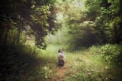 Madera onírica con el perro Foto de archivo libre de regalías