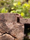madera perforada Foto de archivo