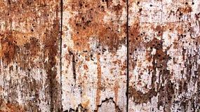 Madera putrefacta Imágenes de archivo libres de regalías