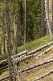 Madera putrefacta en bosque del canto Foto de archivo libre de regalías