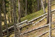 Madera putrefacta en bosque del canto Imagen de archivo