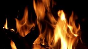 Madera que quema en una hoguera almacen de video