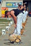 Madera que taja en la demostración 2012 de Cantorbery A&P Imagenes de archivo