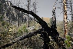 Madera quemada. Imagen de archivo libre de regalías