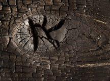Madera quemada del nudo macra Foto de archivo