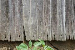 Madera resistida vieja del granero, clavos, foto de archivo libre de regalías