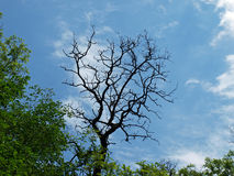 Madera seca en bosque de hojas caducas europeo Fotos de archivo libres de regalías