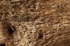 Madera seca vieja de la deriva resistida y grunge Fotos de archivo