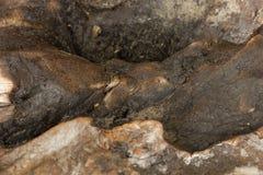 Madera socarrada Fotos de archivo