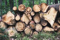 Madera tajada, woodpile, le?a en bosque foto de archivo