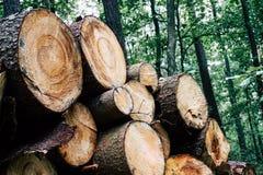 Madera tajada, woodpile, le?a en bosque imagenes de archivo