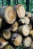 Madera tajada, woodpile, le?a en bosque fotos de archivo libres de regalías