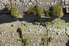 Madera vieja con el musgo imágenes de archivo libres de regalías