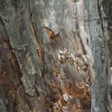 Madera vieja de la madera Fotos de archivo libres de regalías