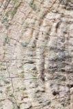 Madera vieja de la teca Imágenes de archivo libres de regalías