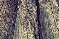 Madera vieja del árbol foto de archivo libre de regalías