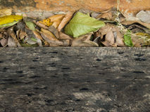Madera y la hoja seca imagen de archivo libre de regalías