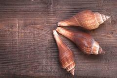 Madera y mar Shell Fotografía de archivo