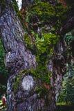 Madera y musgo viejos Imagen de archivo libre de regalías
