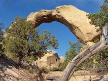 Madera y roca Imagen de archivo libre de regalías