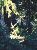 maderas Imagen de archivo